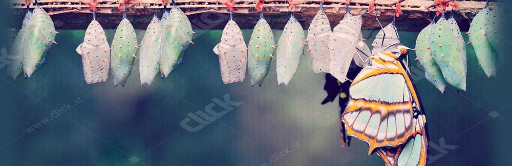 اثر پروانهای