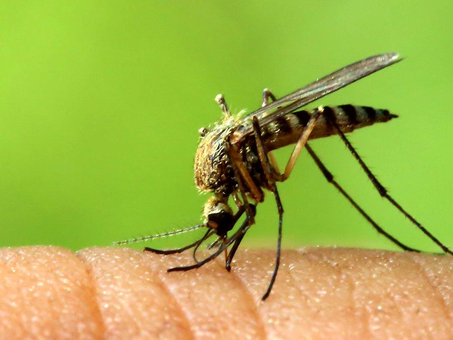 راه حلی برای کاهش ابتلا به مالاریا