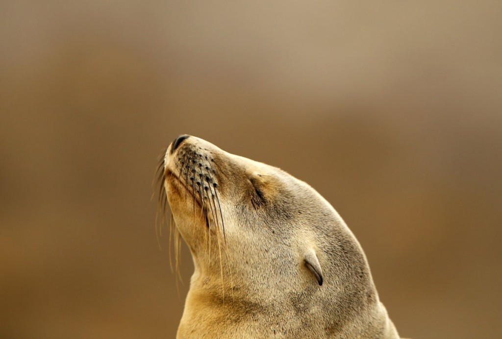 a-contemplative-seal-pup-rests-on-a-rocky-point-along-the-sh