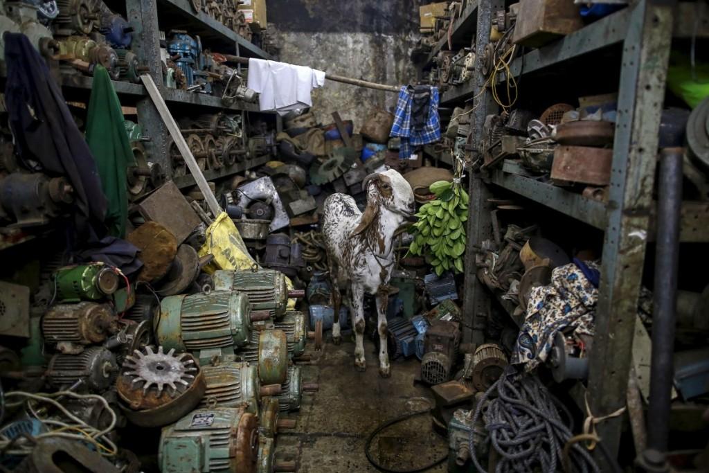 a-goat-eats-leaves-inside-a-motor-pump-workshop-in-mumbai-in