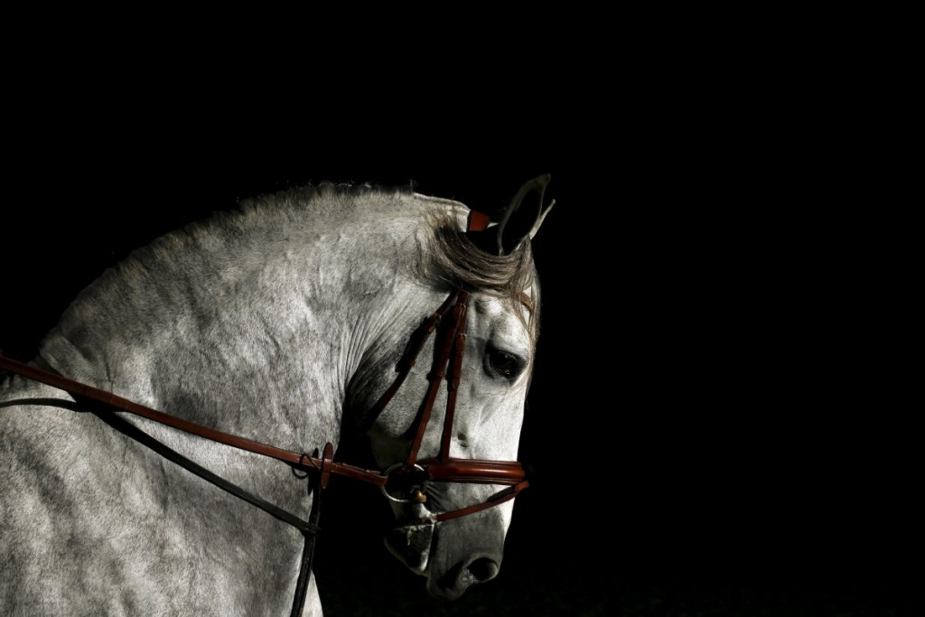 a-purebred-spanish-horse-is-pictured-during-the-sicab-intern