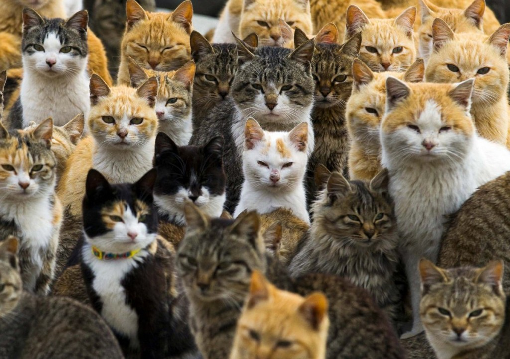 an-army-of-cats-rules-the-remote-aoshima-island-in-southern-