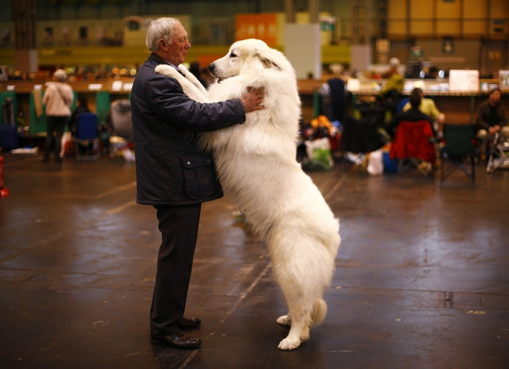 arthur-ward-stands-with-his-pyrenean-mountain-dog-cody-durin