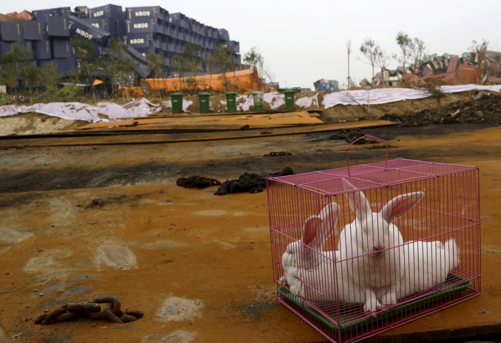 authorities-in-tianjin-china-placed-these-rabbits-near-the-s