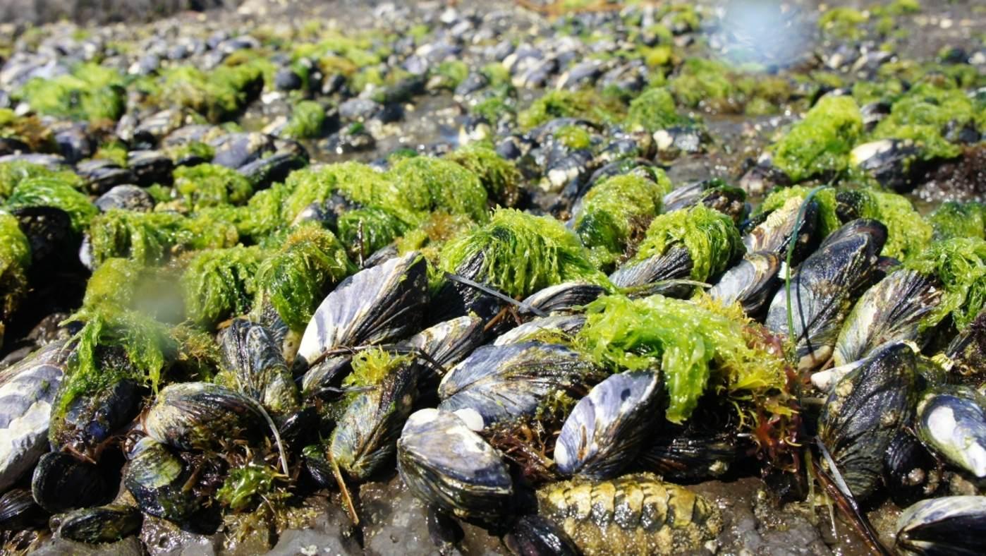 تصویر صدف دریایی