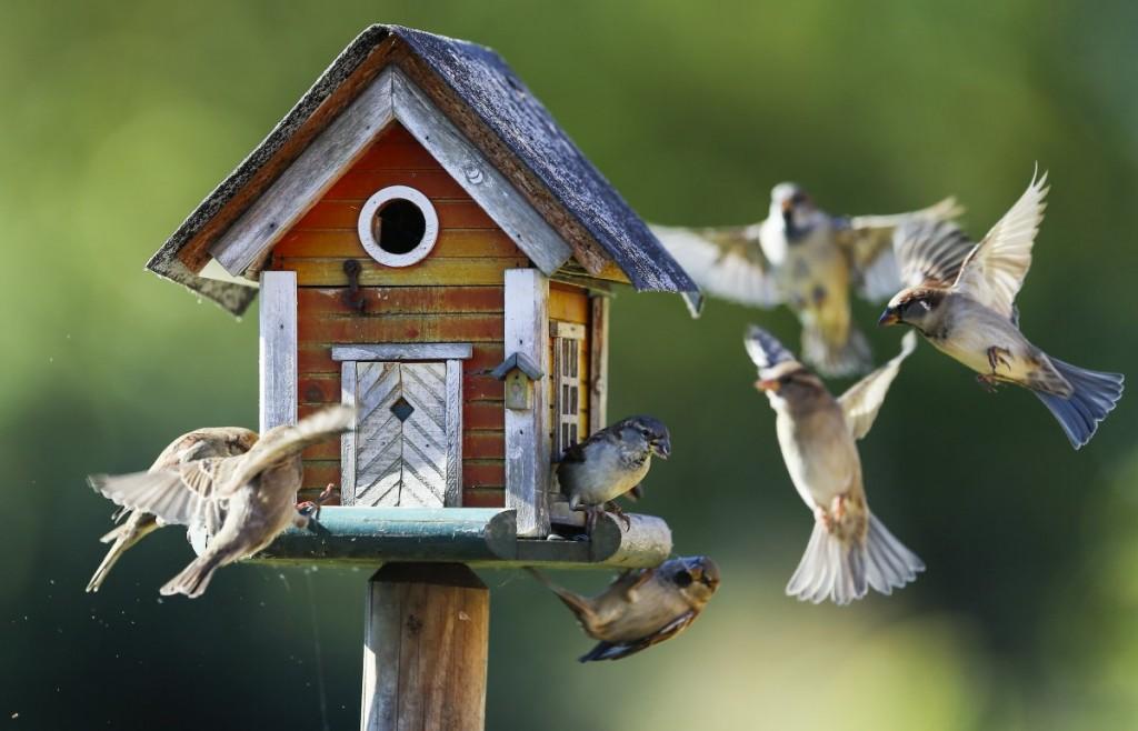 sparrows-fly-around-a-bird-feeder-in-putgarten-germany