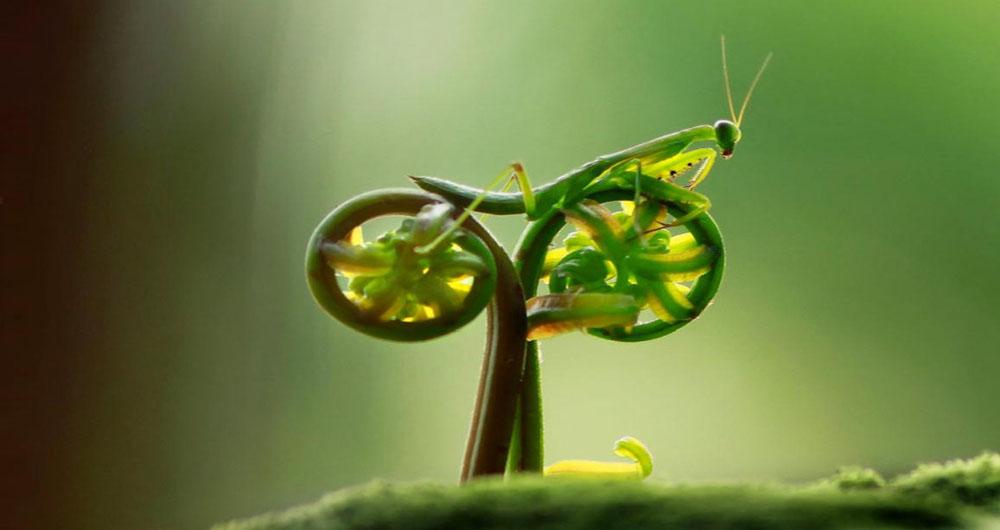 الهام از دید سه بعدی یک جانور در ساخت ربات های آینده