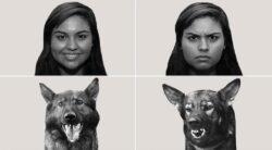 یافتههای جدید پژوهشگران در مورد چگونگی درک حالتهای عاطفی توسط سگها