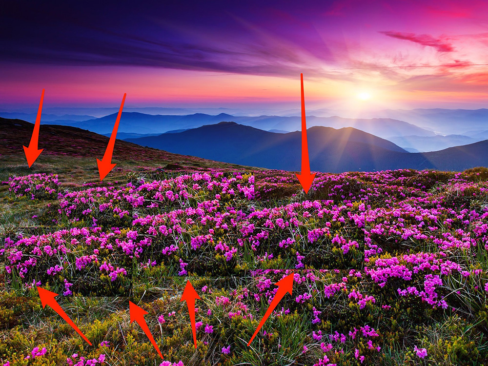 از آنجایی که من عاشق این بوته های گل هستم آن ها را در کل تصویر قرار داده ام