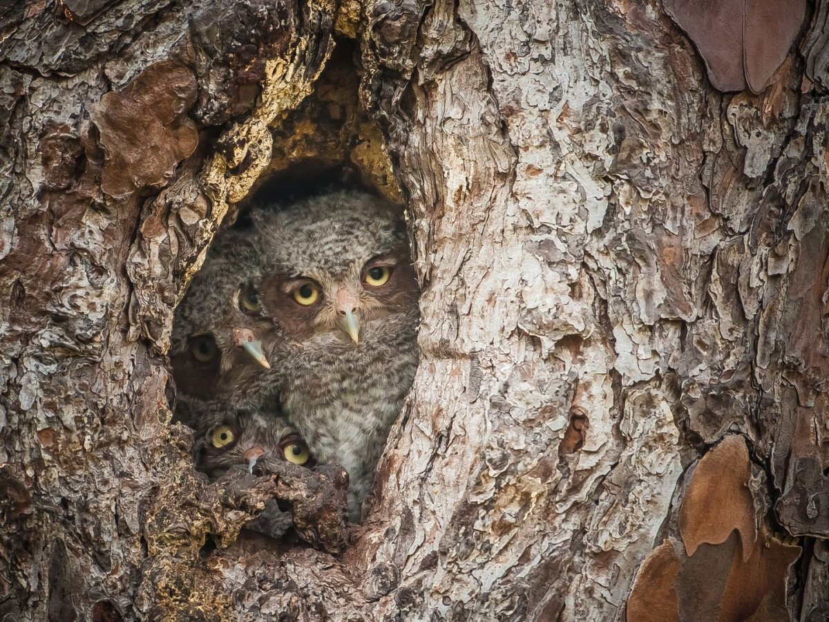 i-cant-tell-if-these-owls-are-pissed-that-photographer-graham-mcgeorgeis-bothering-them-or-upset-that-theyre-all-smashed-