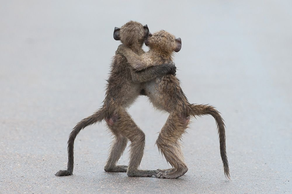 these-baby-baboons-are-going-to-be-besties-for-ever-i-know-it