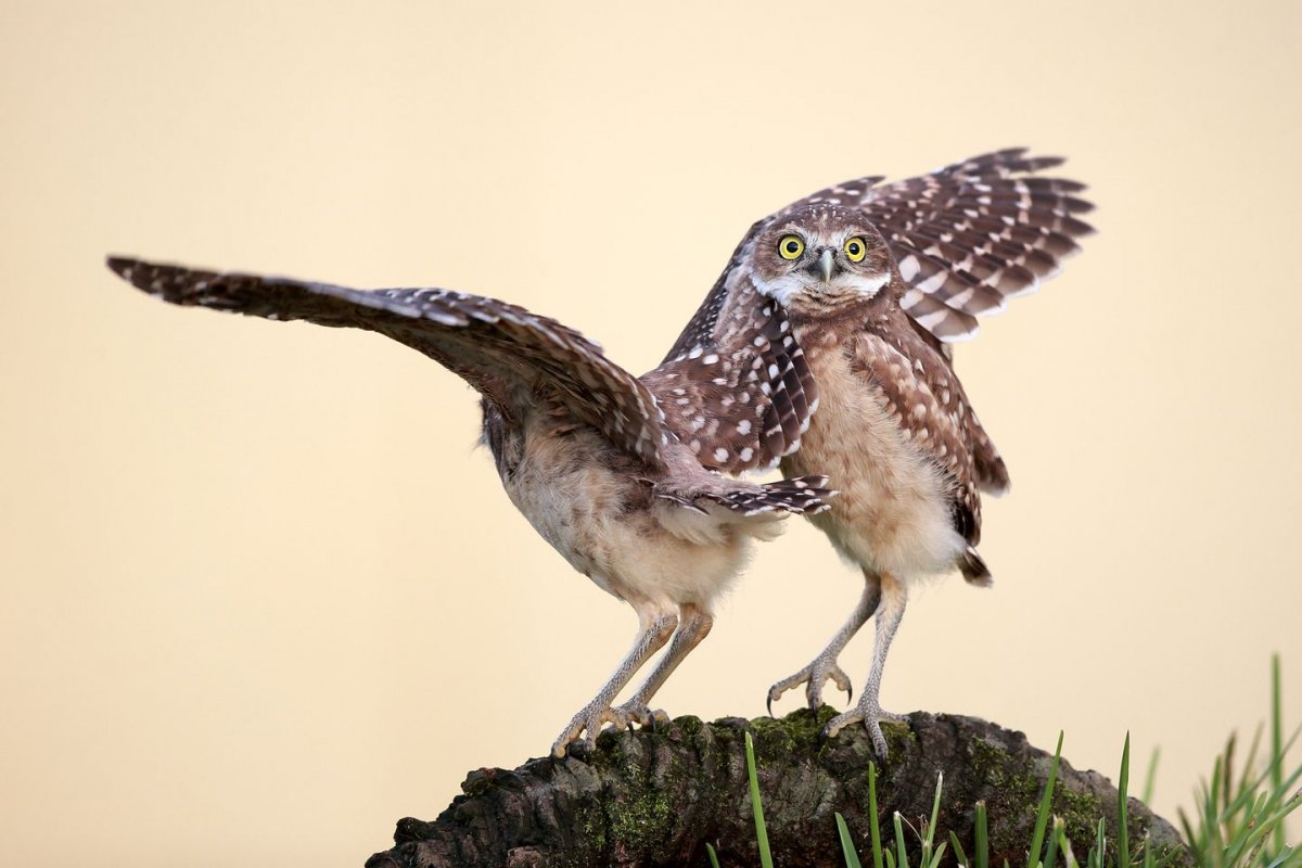 these-owls-are-just-a-couple-of-weirdos-hanging-on-a-log