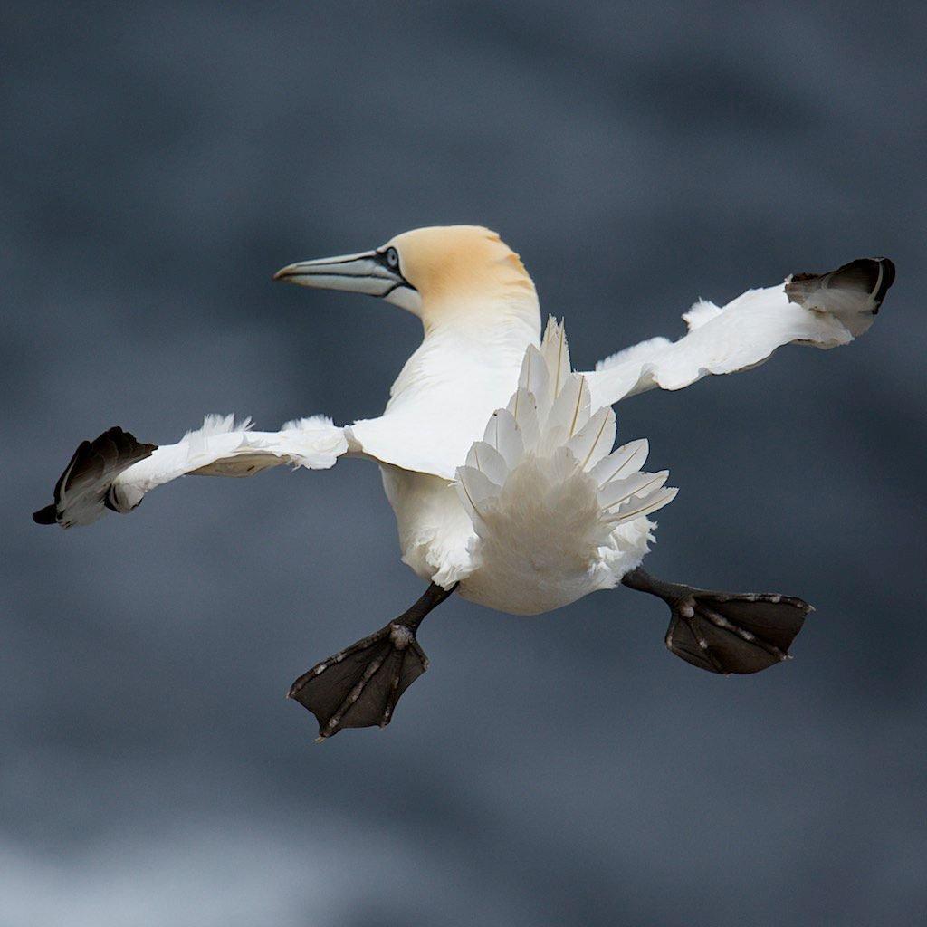 this-bird-is-just-a-bird-doing-bird-things