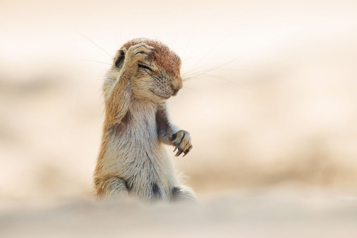 this-squirrel-should-have-had-less-fun-on-sunday-funday