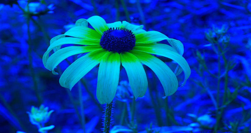 Dr-Klaus-Schmitt-Bee-Vision-Flower-Photography-2