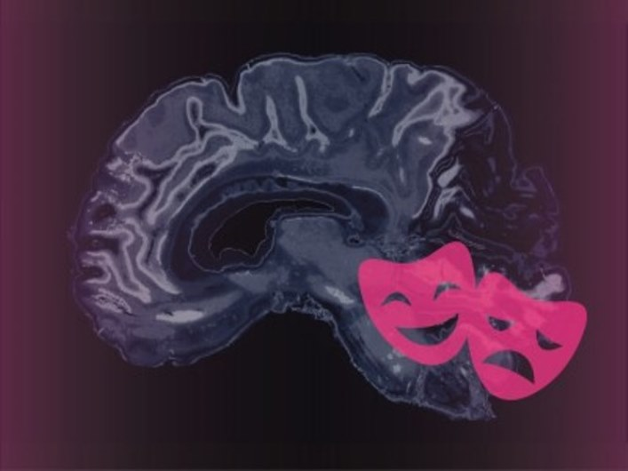 اسکنر جدید UConn نشان میدهد زمانی که مغز انسان به مسائل عاطفی واکنش نشان میدهد قسمتهایی از مغز روشن میشود
