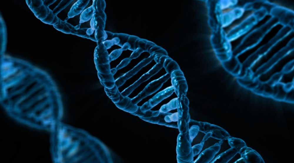 کشف DNA باستانی در بشر امروزی