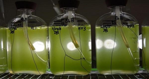جداسازی موفقیتآمیز یک آنزیم گیاهی برای تولید انبوه سوختهای زیستی
