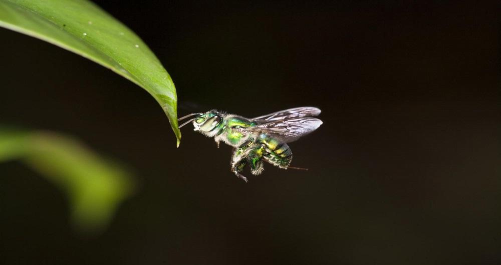 چشم حشرات، الهامبخش پهپادها برای پرواز به صورت مستقل
