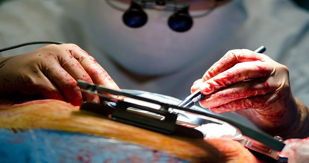 گروه ژنتیک تلگرام پیوند قلب خوک به انسان در آینده نزدیک - رسانه کلیک