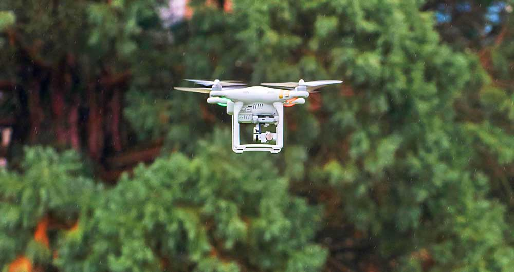 Drone-pinetreesjpg