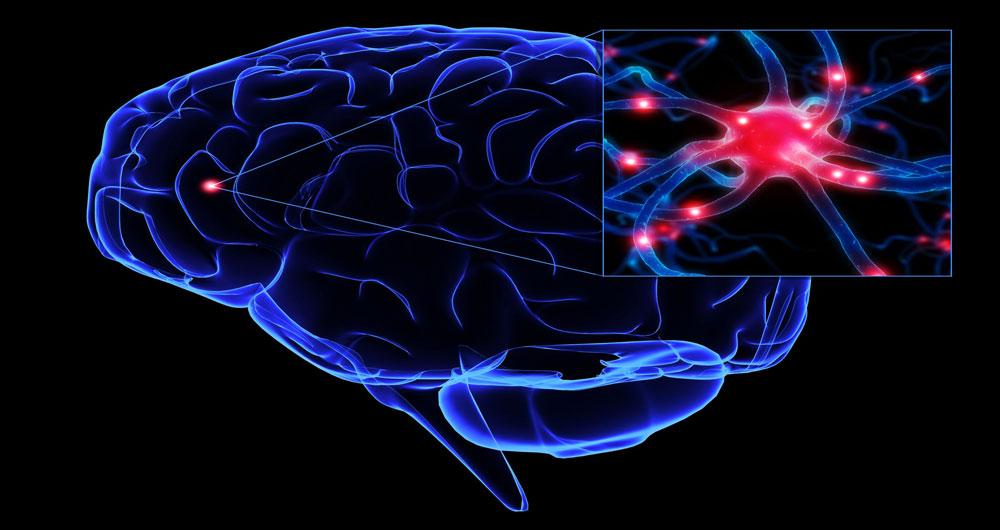 brain-andneuron2
