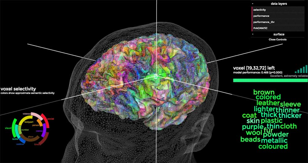 بخش مسئول پردازش معانی و مفاهیم در مغز کشف شد