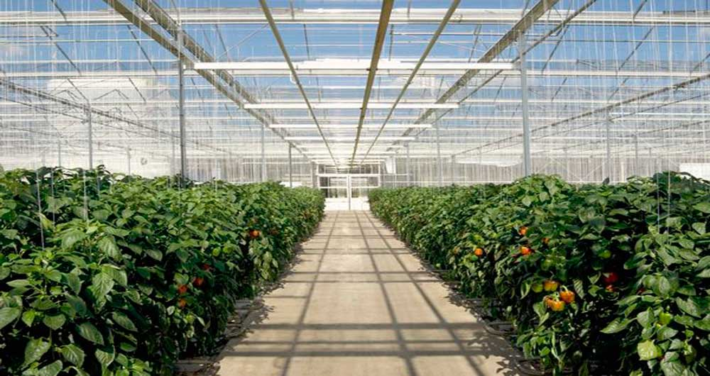 مکانیزم تنظیم زمان گلدهی در گیاهان کشف شد