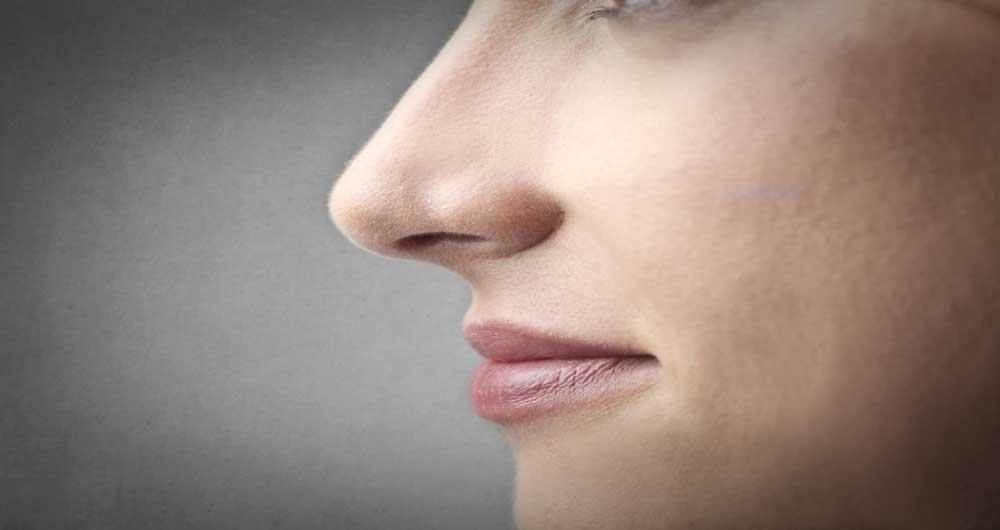 عامل شکل دهی بینی انسان ها کشف شد