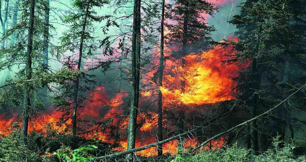 پایش آتش سوزی جنگل ها در ایران با کمک ماهواره های روسی و فرانسوی