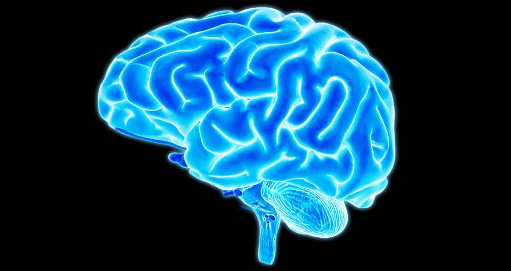 brain-main
