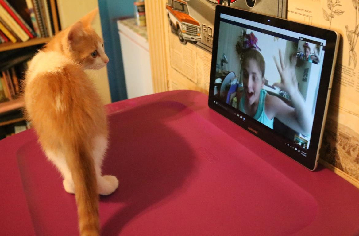 cat-using-skype_002