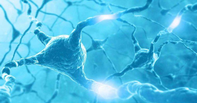 how-does-a-nerve-impulse-travel-along-a-neuron_08b2b21b-02f9-4e9f-a7a1-c325e6b102a1-(1)