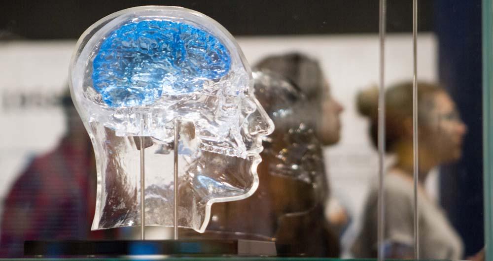 روش جدید دانشمندان برای پروش سلول ها مغزی به صورت ۳ بعدی