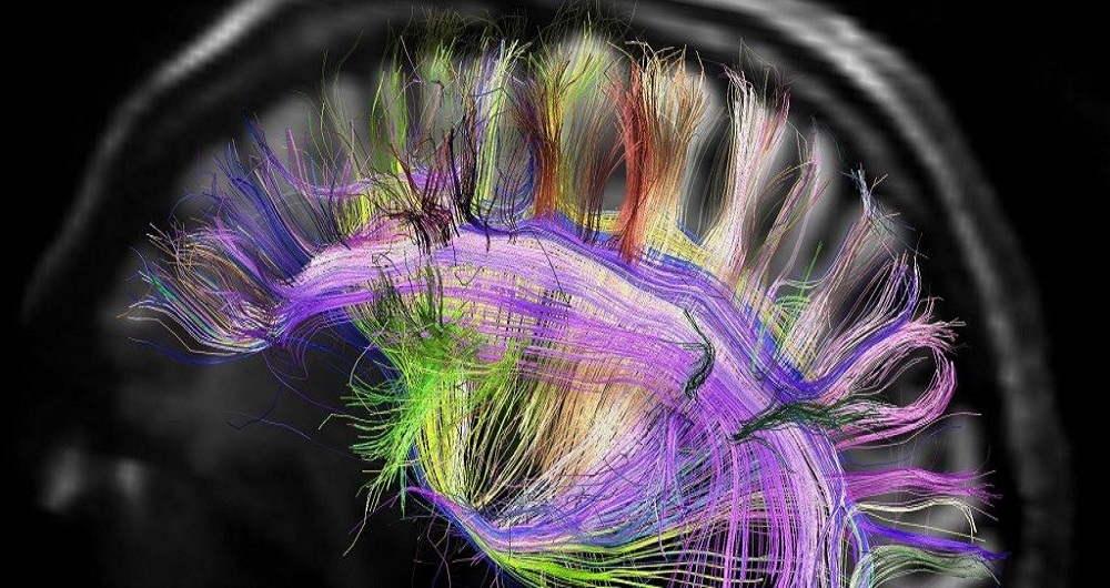 کشف راهی علمی برای افزایش چند برابری حافظه افراد