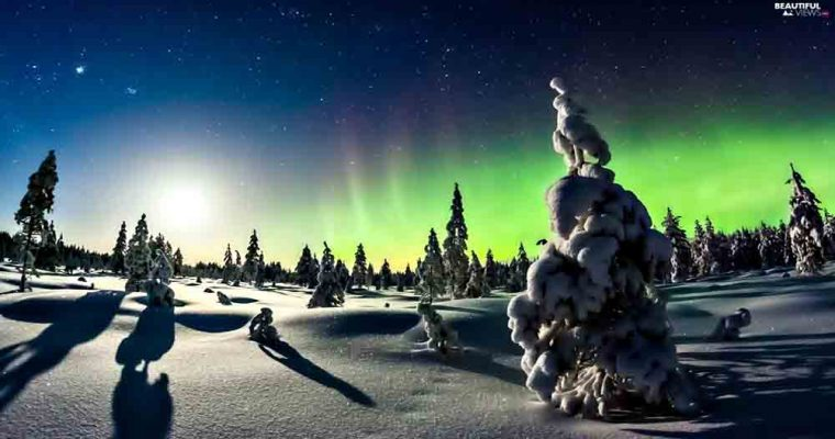 aurora-viewes-snow-winter-trees-polaris-star