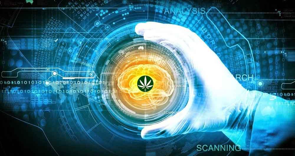 brain-marijuana
