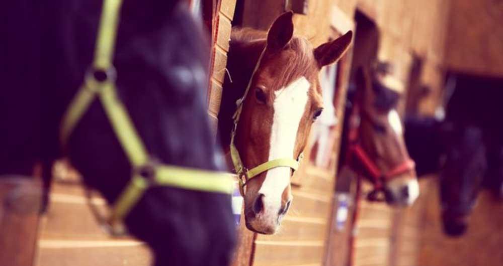 اسب ها می توانند با زبان بدن ما صحبت کنند