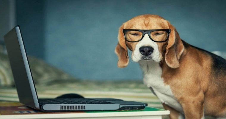 فناوری جهت درک صحبت انسان برای سگ ها
