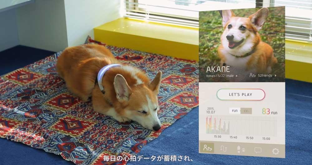 قلاده هوشمندی که احساسات سگ را نشان می دهد