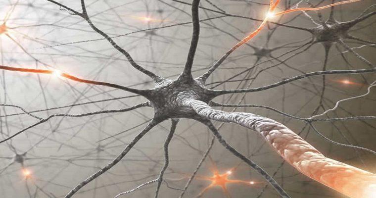 MS neuron