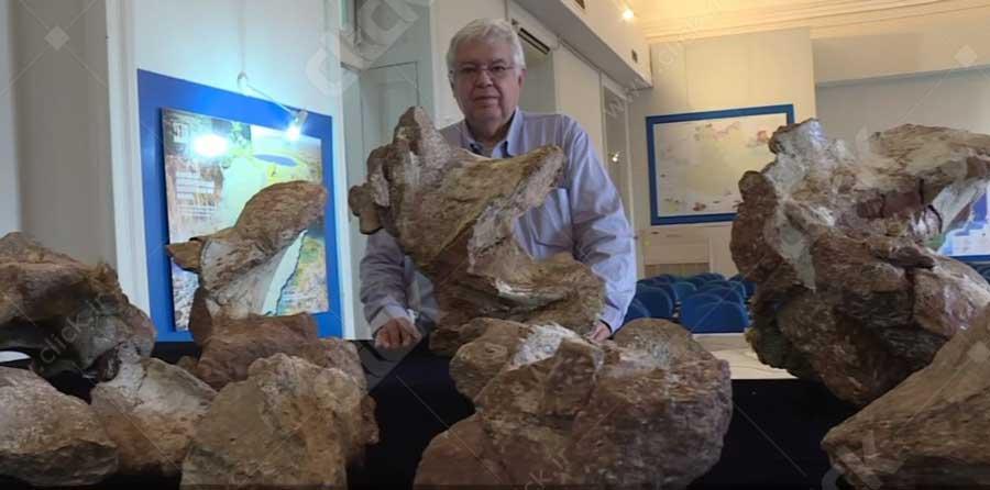 دایناسور برزیلی