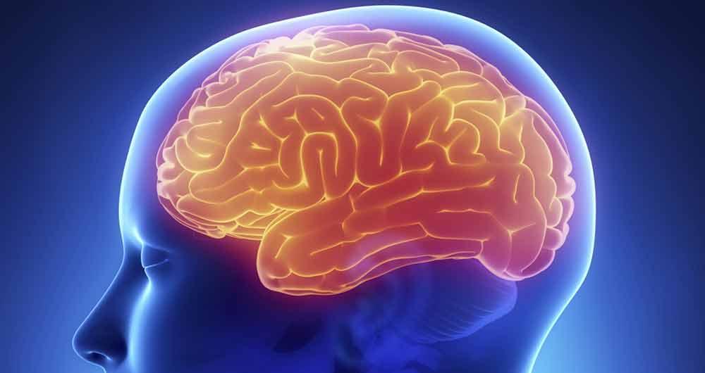 ثابت ماندن مغز بعد از یادگیری زبان های مختلف