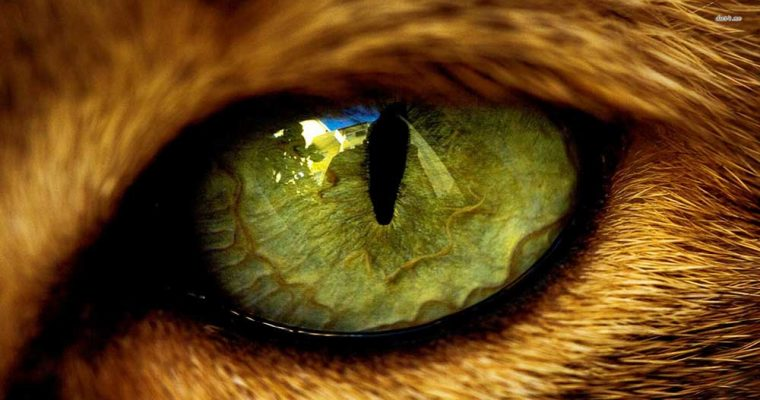animal-eye