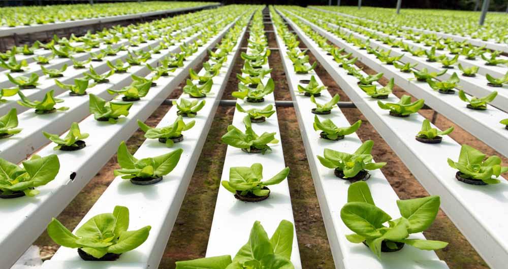 ابداعات هوشمندانه تکنولوژی در کشاورزی مدرن