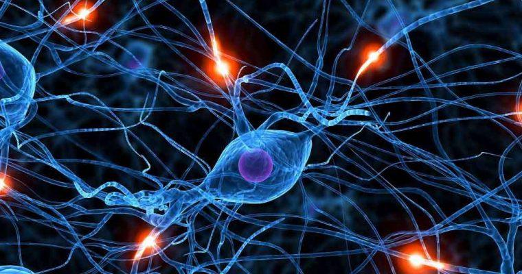 آخرین شواهد منشا بیماری پارکینسون را به دستگاه گوارش مربوط می دانند