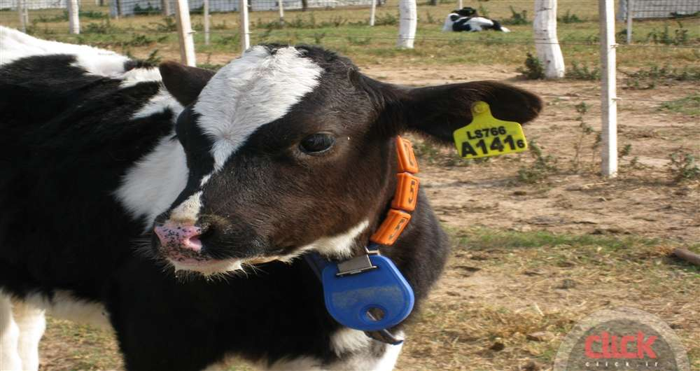 livestock-biometrics_new