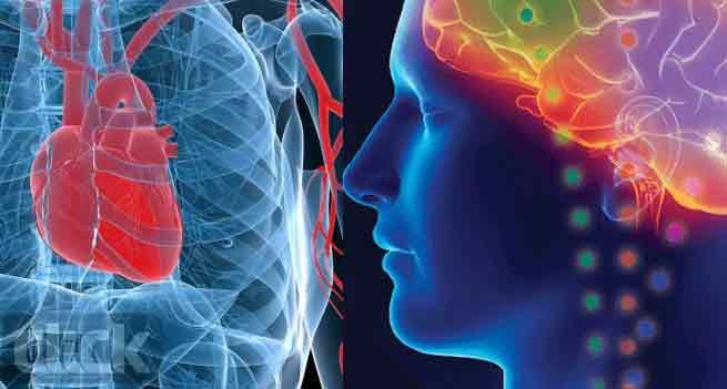شناسایی مغز در قلب