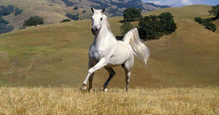 ردیابی اسب ایرانی