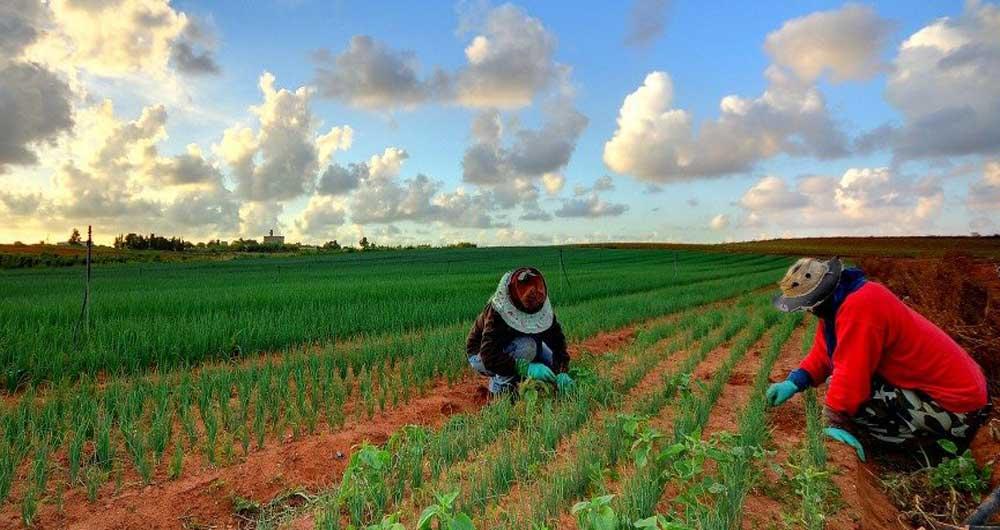 ساخت اسپری مخصوص برای تغییر ژنتیک گیاهان